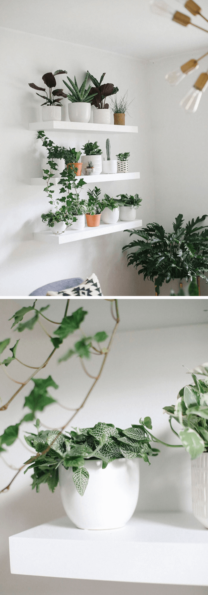 How to build an oxygen-filled plant wall