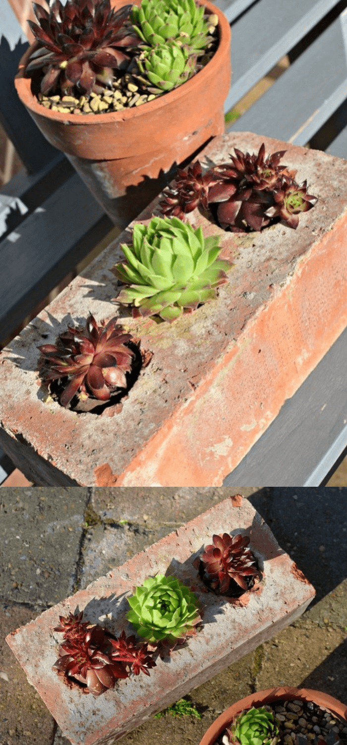 Succulents Planter