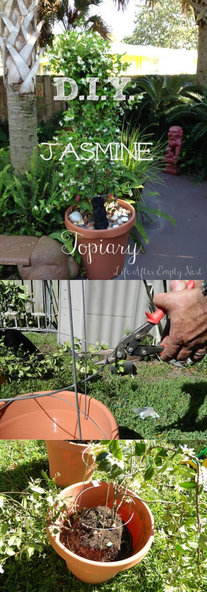 how to make a topiary tree in pot for beginners DIY Jasmine Topiary