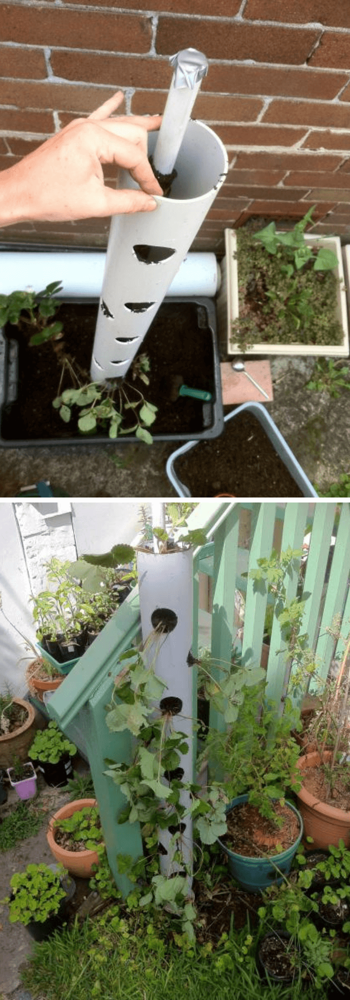 DIY PVC Pipe Planters for Your Garden Vertical strawberry tube planter