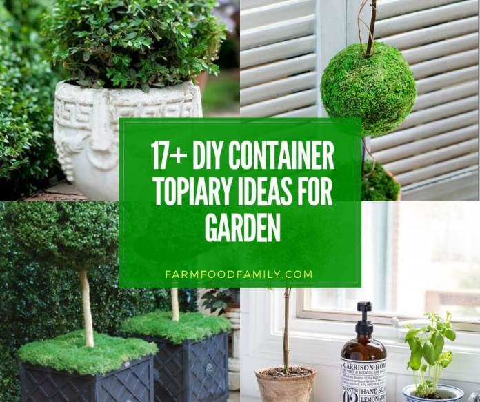 best diy container topiary ideas for your home and garden