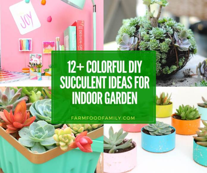 best succulent container garden ideas for indoor garden