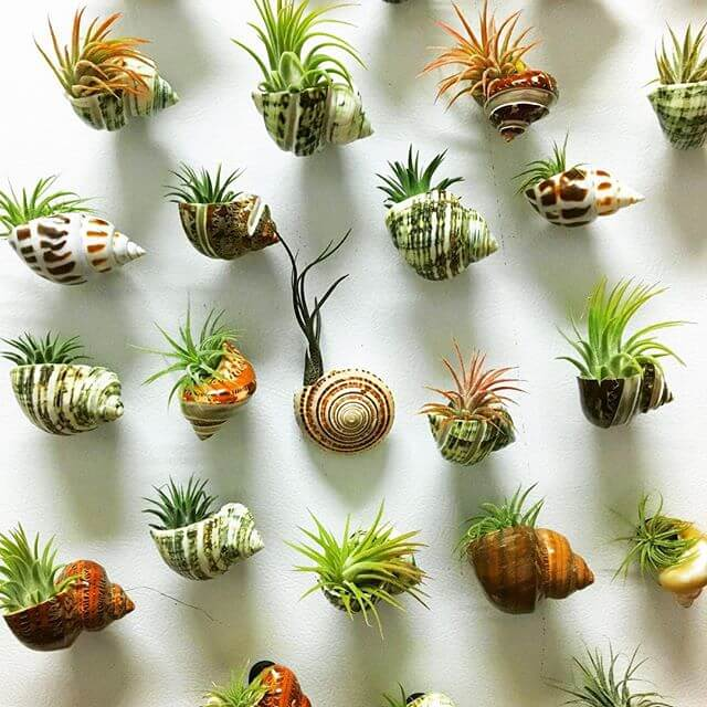15 Best Hanging Air Plant Holder Ideas Amp Designs For 2020