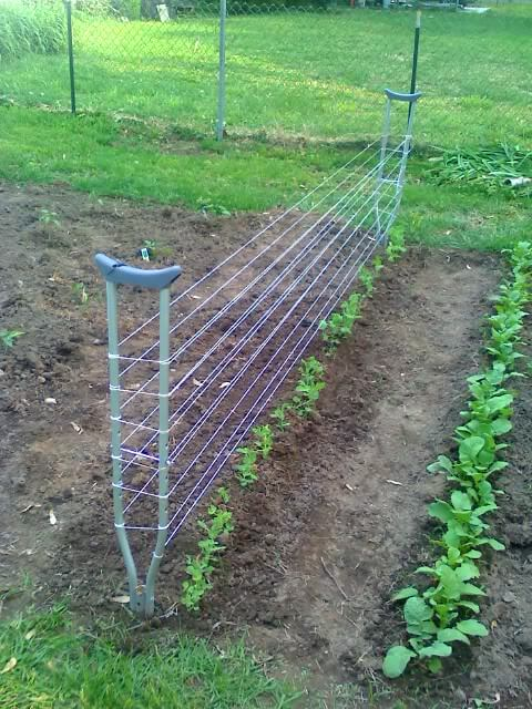 DIY Pea Trellis from old Crutches