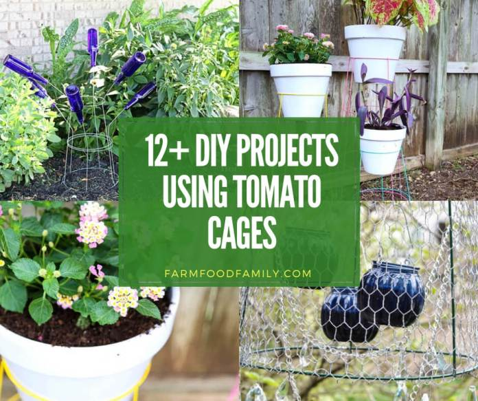 best diy projects using tomato cages