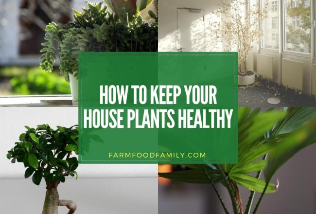 How to keep houseplants healthy