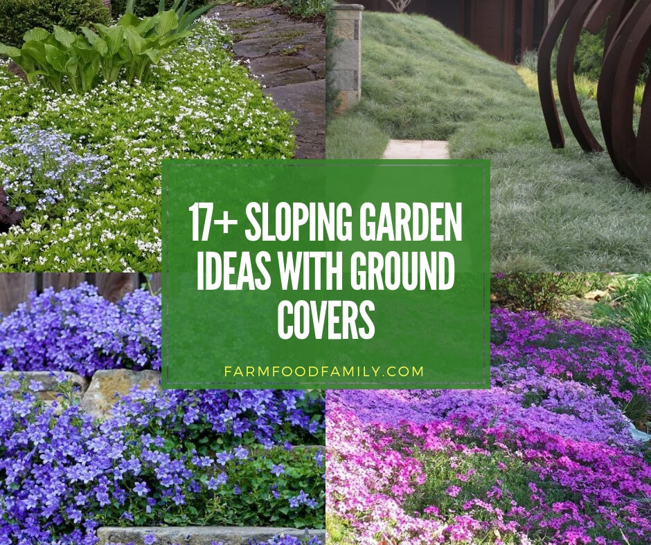 17+ Sloping Garden Ideas with Ground Covers - FarmFoodFamily on Garden Designs For Sloping Gardens id=77193