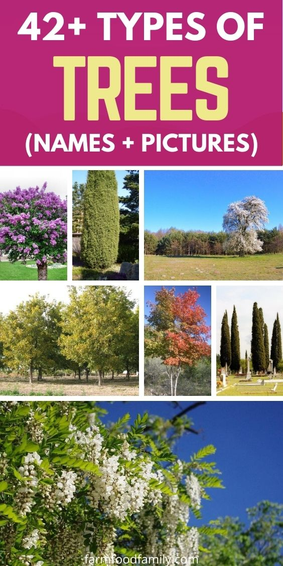 different types of trees with names and pictures