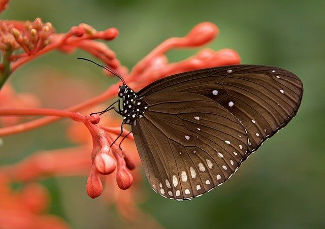 Brown butterfly meaning
