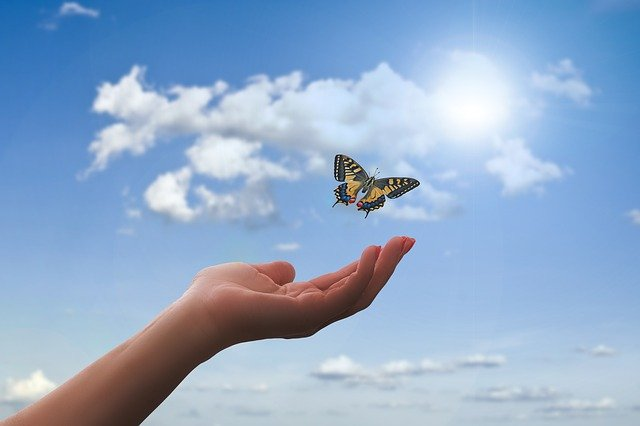 What does it mean when a butterfly flies around you?