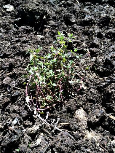 april garden 7