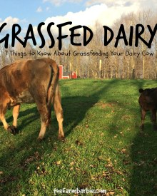 Can You Grass Feed a Jersey Cow?