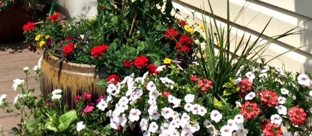 Container Gardening – How to fill your Flower Pots on a Budget
