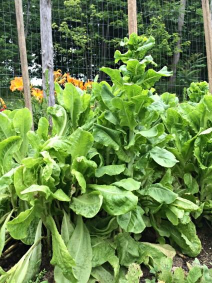 garden prob 1