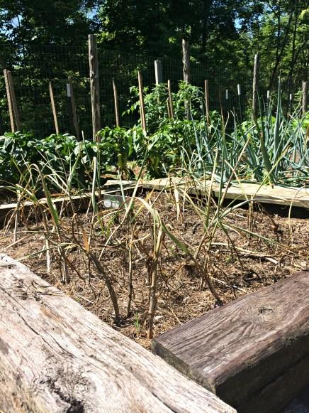 garden prob 11