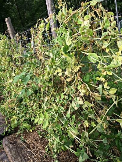 garden problem 3