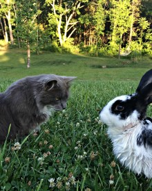 How to Keep Outdoor Rabbits Safe