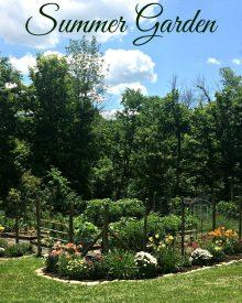 Garden Update – June Edition