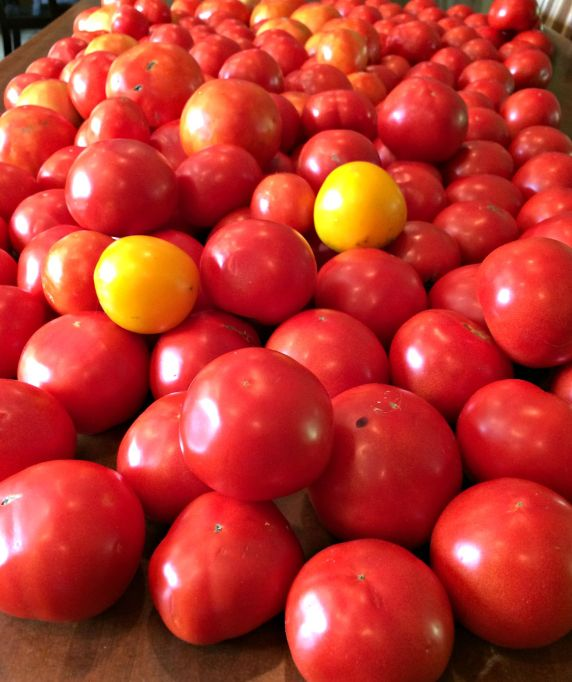 tomatoes 1.9