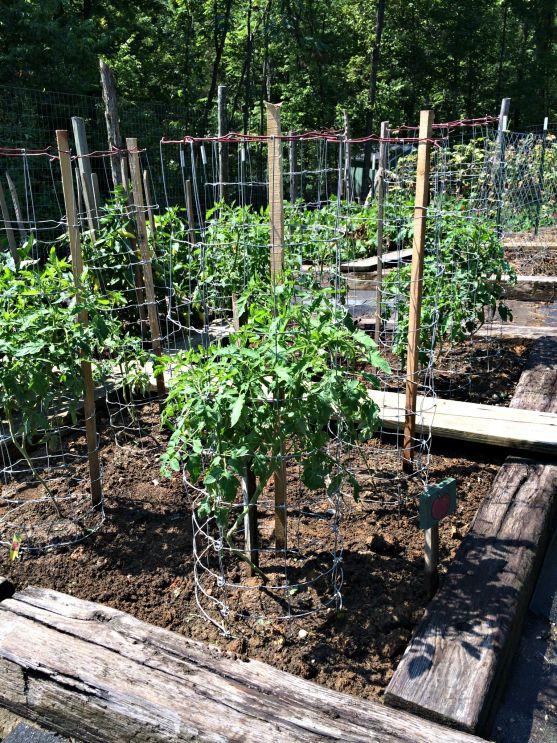 august garden 4