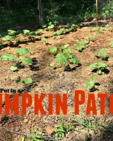Build a Garden in 2 Hours (almost) – We put in a Pumpkin Patch!