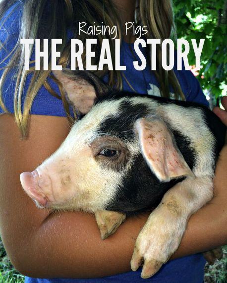 RAISING PIGS 3