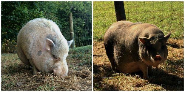 farm chores collage 1