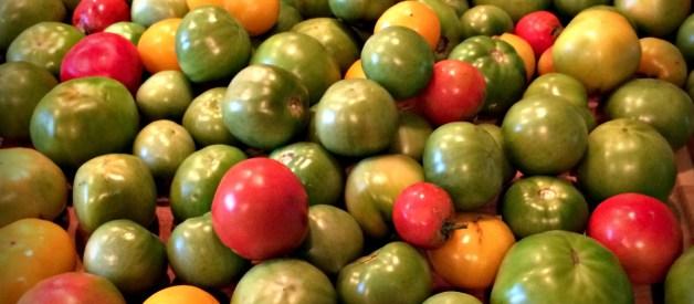 Homesteaders Food Challenge Wrap Up