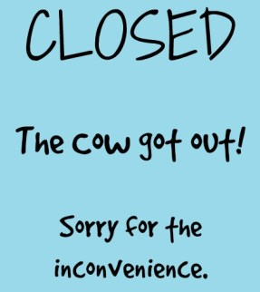 closed the cow's out