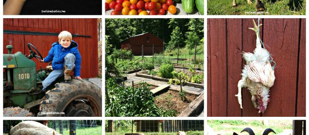 Surprising Benefits of Raising Our Own Food