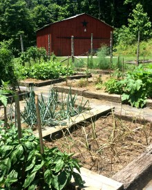 Raised Garden Beds – Pros & Cons
