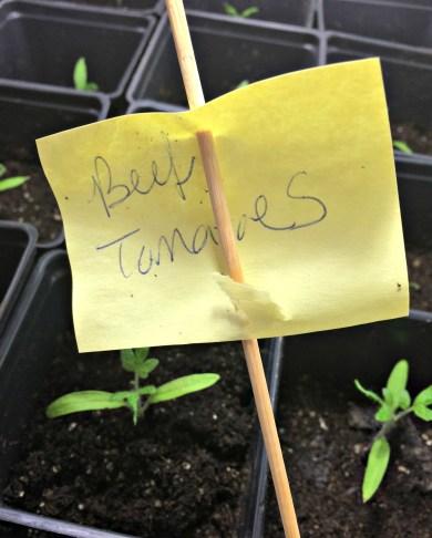 seedling 1.7