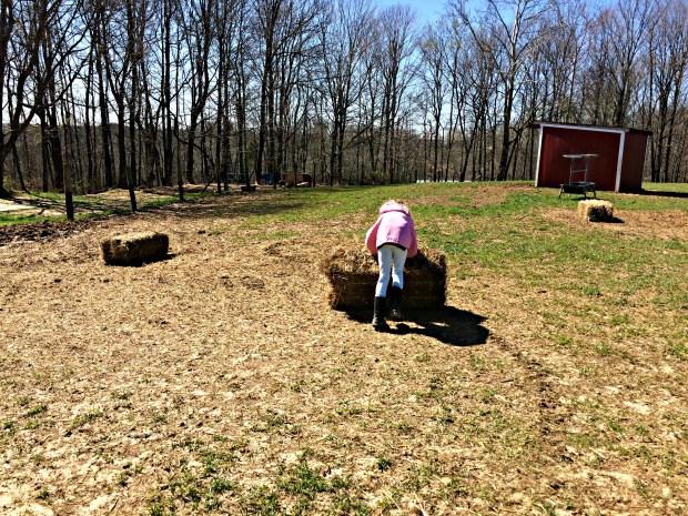 pasture repair 6