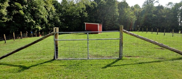 Bring a Field back to Life in 4 Simple Steps – How to Fix a Pasture, run or field