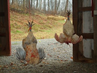 Butchering Backyard Chickens – Farm Fresh For Life – Real