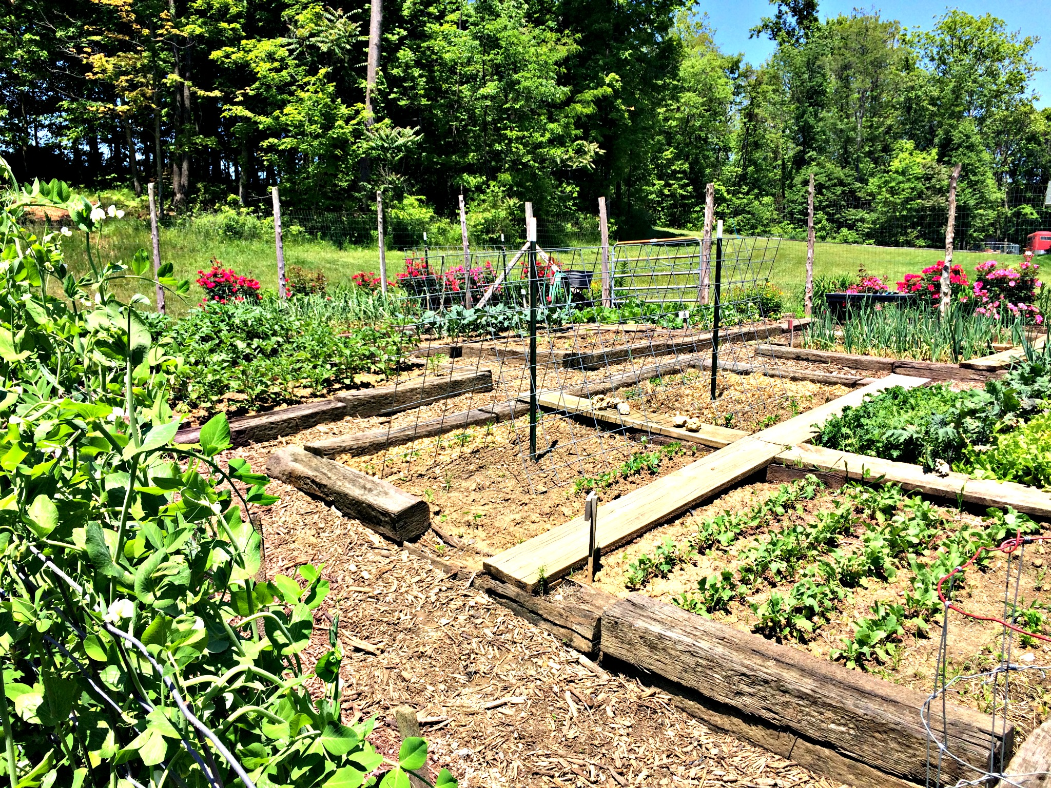 How to Grow More Food in Less Space A Garden Tour Farm Fresh