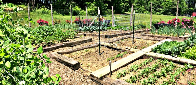 7 Tips For a Successful Garden This Year