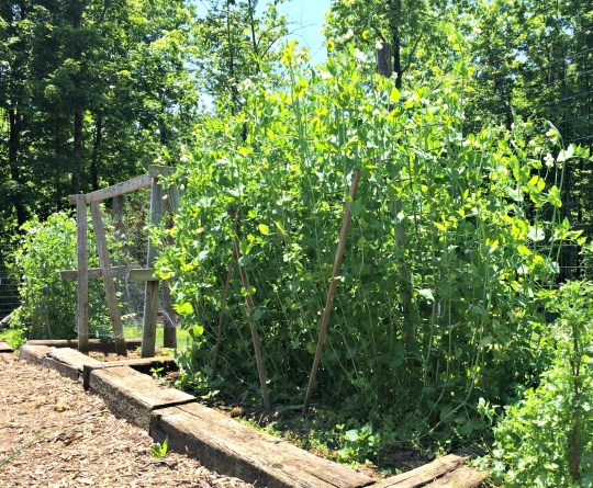 may garden 2
