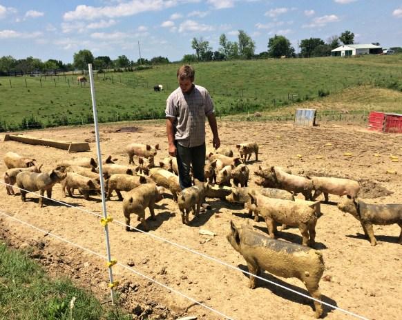 pigs! 2
