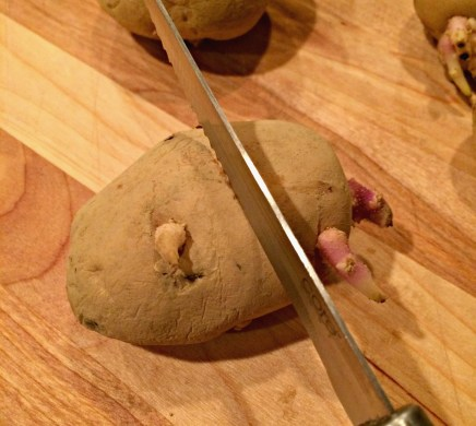 potatoes 7