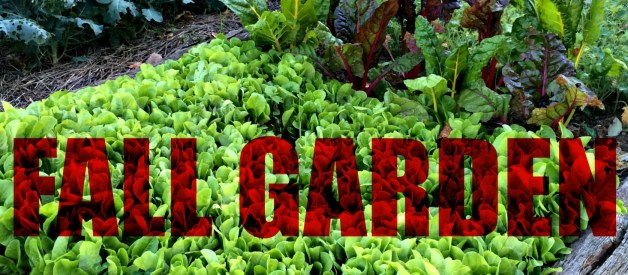 Plan a Fall Garden