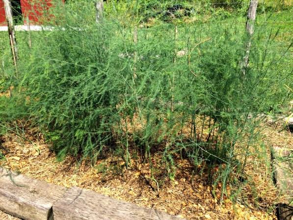 no weeds 7