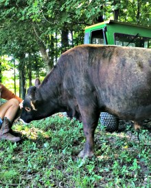 Best Tips to Begin Your Homestead Dream #7:  The Food Connection (Premium)