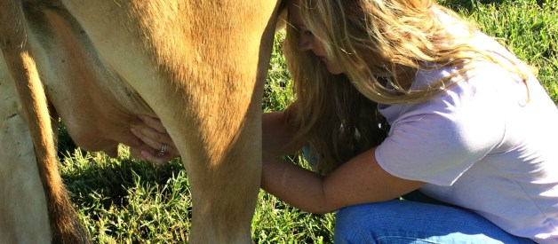 The First Time Milking – What to Expect When You Milk a Cow for the First Time