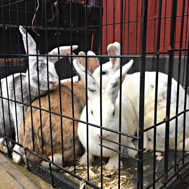 rabbit-skin-1