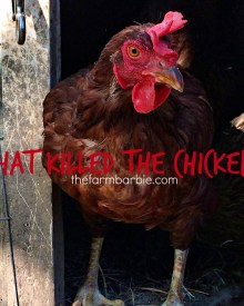 What Killed the Chicken?