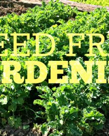 No More Weeds!!!  Here's my Secret to Weed-free Gardening