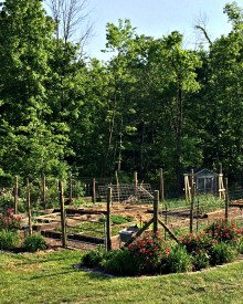 How to Grow More Food in Less Space – A Garden Tour