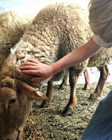 Loading the Lamb – Video (Premium)