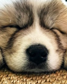 January Peek Behind the Scenes – Dog Problems (Premium)